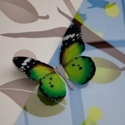 Flutter 005